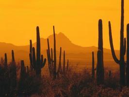 Curioso saber, Madera de Cactus.