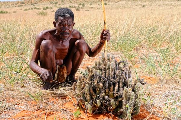 El cactus hoodia: ¿Un remedio milagroso?