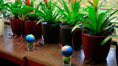 Energía de las Plantas.