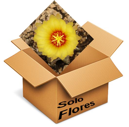 Solo flores I