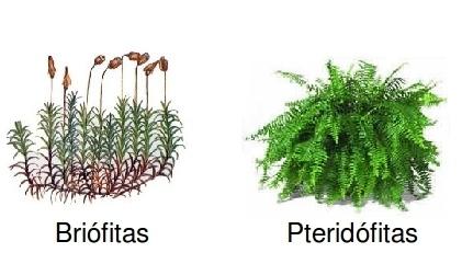 Briofitas y Pteridofitas